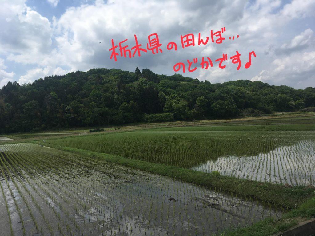 栃木の田んぼ